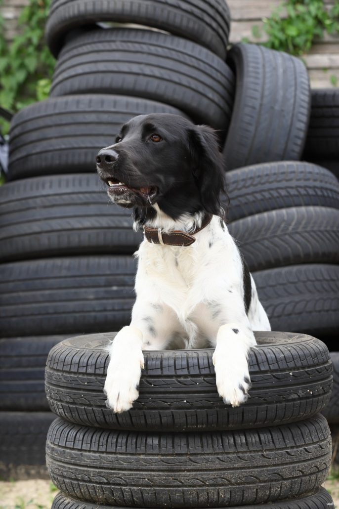 Hund im Reifenstapel